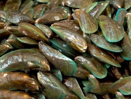 Frozen Whole Mussel