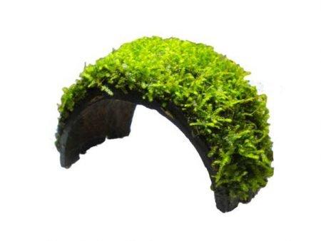 Coconut Bracelet With Java Moss