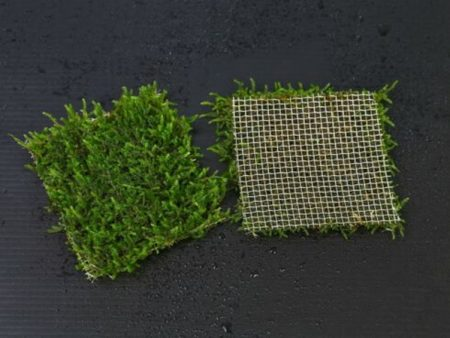 Java Moss On Net Pad