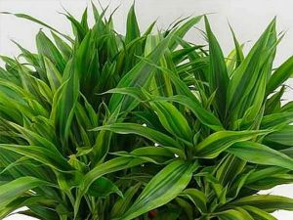 Terrarium Plants