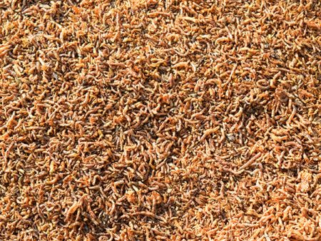 AquaSnack Freeze-Dried Bloodworm