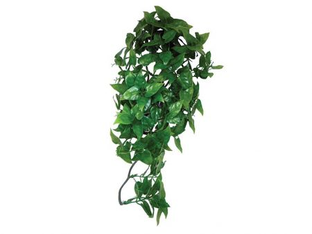 Komodo Philodendron Hanging Plant